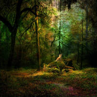 Forest Den by Stroody