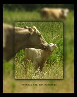 Animals are not machines by x-vegan-x
