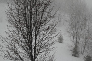 Impertinent Snows - 2 by irriadin