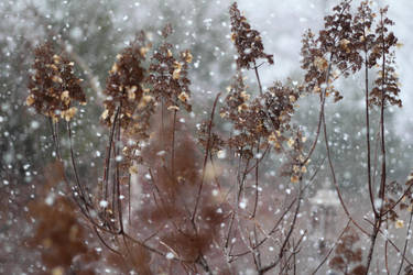 Impertinent Snows - 3 by irriadin