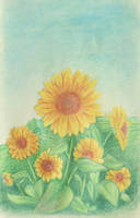 Sunflowers by melyanna