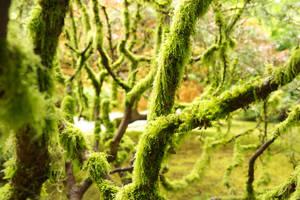 Moss by makobsan