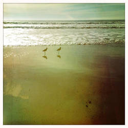 Birds on Beach by athena41398