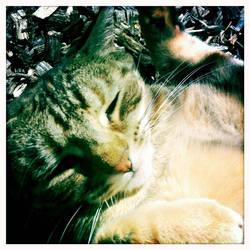 Kawaii Cat by athena41398