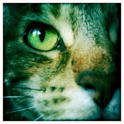 Cat Eye by athena41398