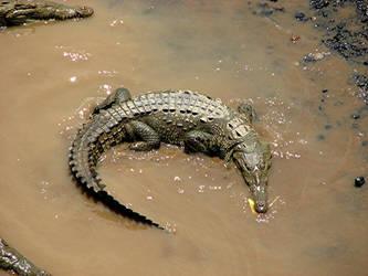 Crocodile by PaulMcKinnon