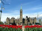 Tulips in bloom by PaulMcKinnon