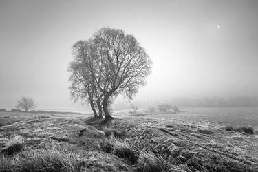 Three trees by TristanCampbell
