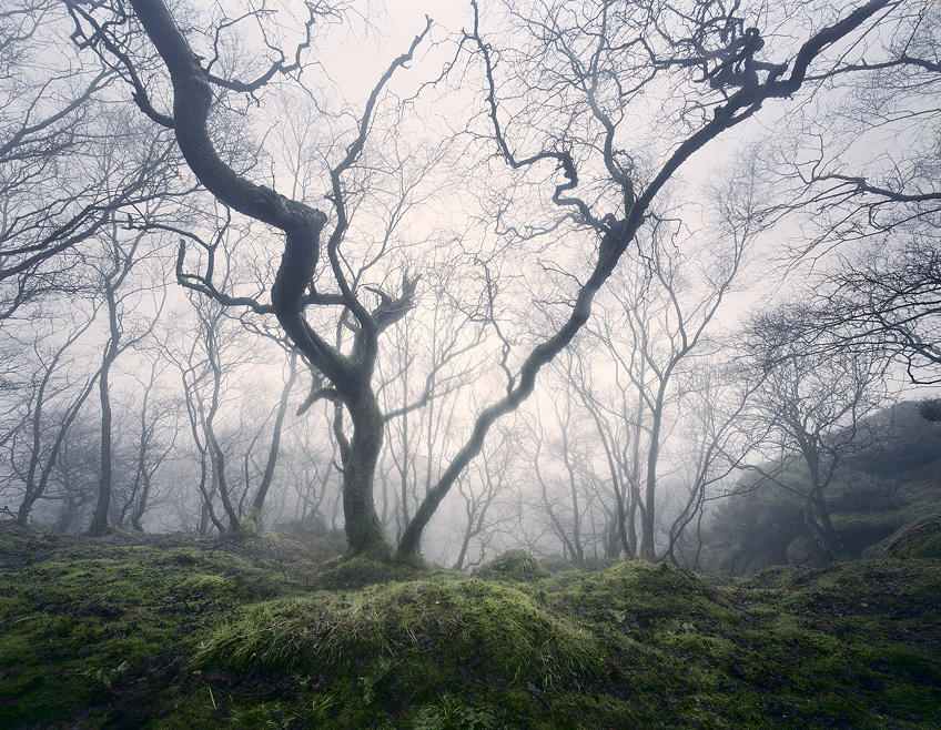 Enchanted Woodland by TristanCampbell