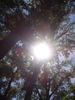 Sun + Trees by cjmj1975