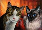 Double cat-portrait by Vinganita