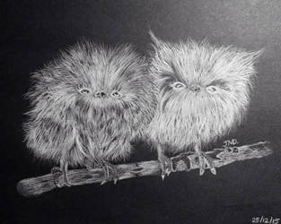 Fluffy Little Owls by Jean-DC