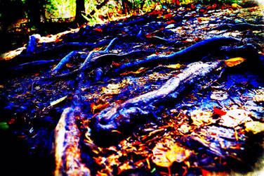 Tripping over tree roots  by ballzy88