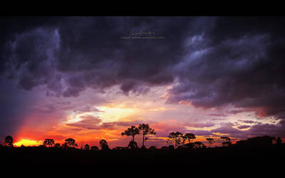 Spring Sunset by Miguel-Santos