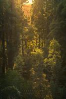 Forestshine by Miguel-Santos