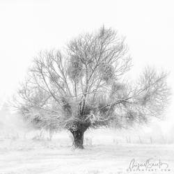 The will of Winter by Miguel-Santos