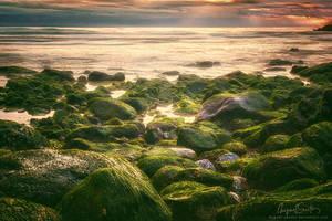 Gold'n'green by Miguel-Santos
