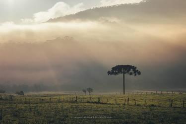 Softly Sunrising by Miguel-Santos