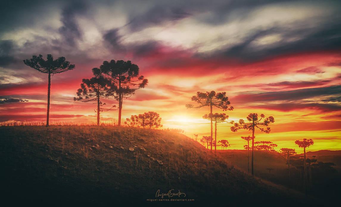 Bright Red Horizon by Miguel-Santos