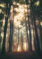 Greenlightwoods by Miguel-Santos