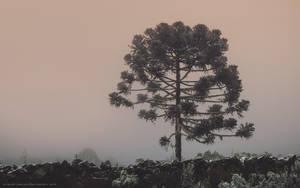 Winter Relic by Miguel-Santos