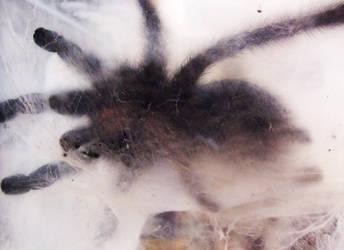 Cobwebs by merkero