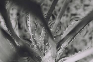 Touch I by merkero