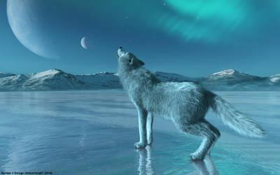 Wolf auf einem eisigen See / Wolf on a icy Lake by tinkerfairy57