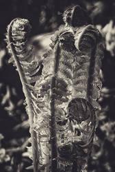 fern by almaclone
