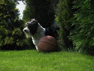 Dog in piece by yachoo