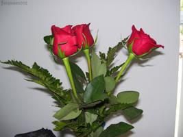 Birthday Roses II by Ferguson002