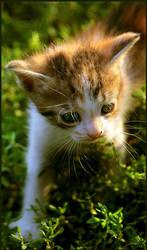 Kitty in Nature - 2 by ValentinaKallias
