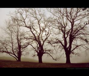 Three Brothers by ValentinaKallias