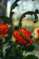 Rose Cemetery by ValentinaKallias