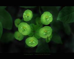 green by ValentinaKallias