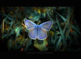 blue by ValentinaKallias
