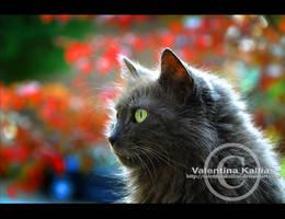 wonderland cat by ValentinaKallias