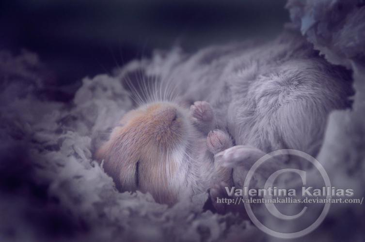 Dreamer by ValentinaKallias