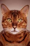 Kitty Mugshot by ValentinaKallias