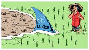Bayer genetic modified rice 2 by Latuff2