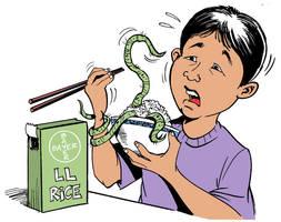 Bayer genetic modified rice by Latuff2