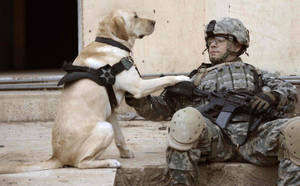 a soldier and his dog by firetruckboy