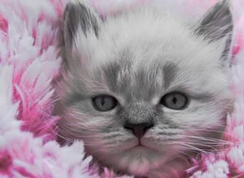 Pink by Str8UpSkills