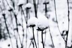 Parait qu'il neige by Azazel-Unborn