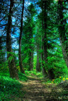 The Enchanted forest by fiamen