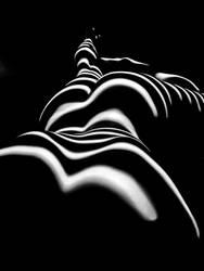 8903-SG Zebra Wpman Sensual Curves Bottoms Up by artonline