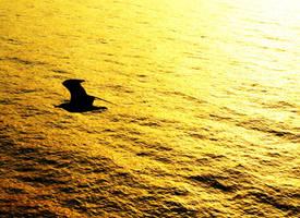 Flight over the golden sea by ghostdog276