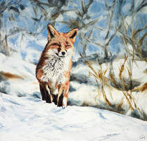 FOX by tempelziege