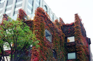 Jongno Days: Ivy by neuroplasticcreative