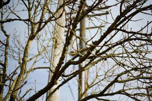 Portland Branch by neuroplasticcreative